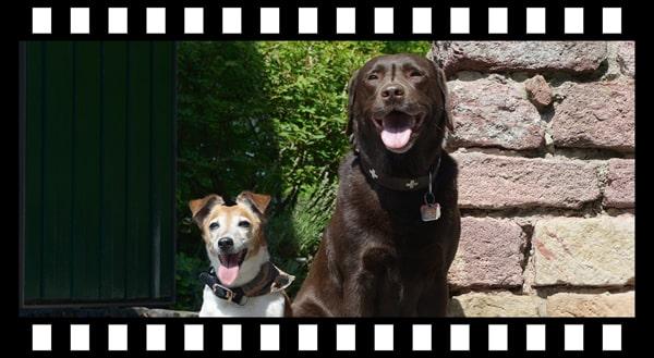 Ein Filmstreifen mit zwei Hunden